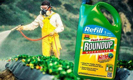 Kon GMO i Monsanto ta kaba ku bo bida