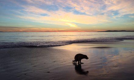 Hondenpoep, een gevaar voor de gezondheid