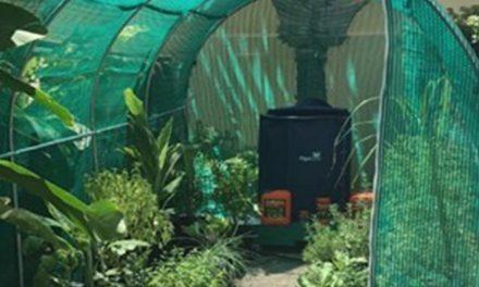 Eigen groenten kweken in de achtertuin